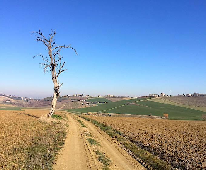 la RUBE': Asfalto, Pavè e Strade Bianche tra Romagna e Marche.